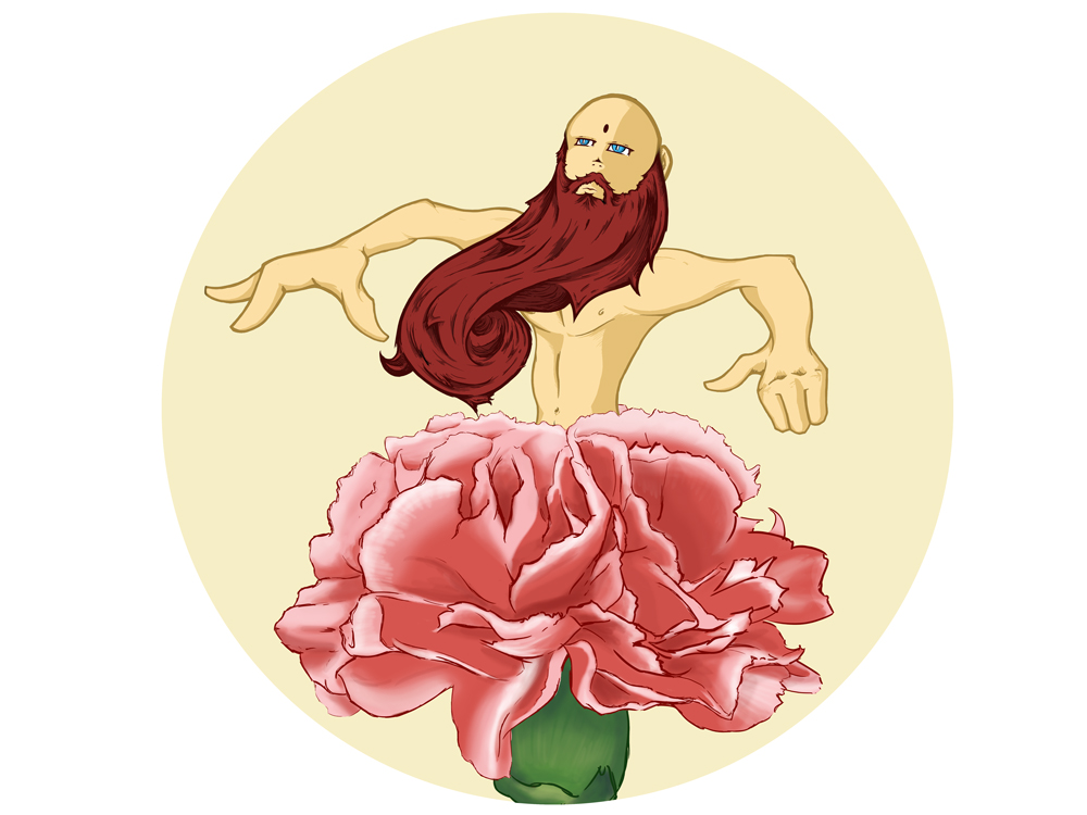 Bearded Carnation